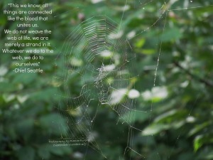 We-are-a-stand-in-this-web-of-life